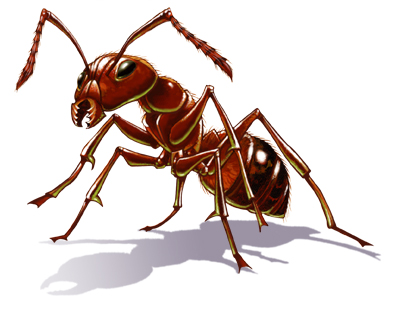 ant treatment and pest control new braunfels corpus christi