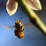 pest control companies that kill and remove bees, hives and colonies