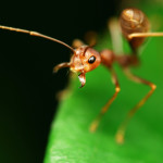 fire ant pest control and exterminators