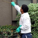 residential pest control services in texas san antonio new braunfels ingleside mcallen