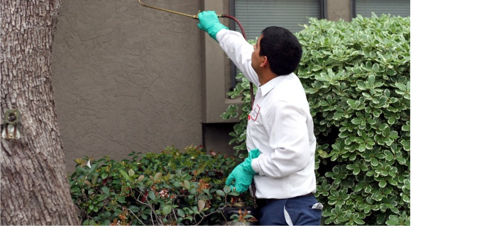 residential_pest_control_services_in_texas_san_antonio_new_braunfels_ingleside_mcallen