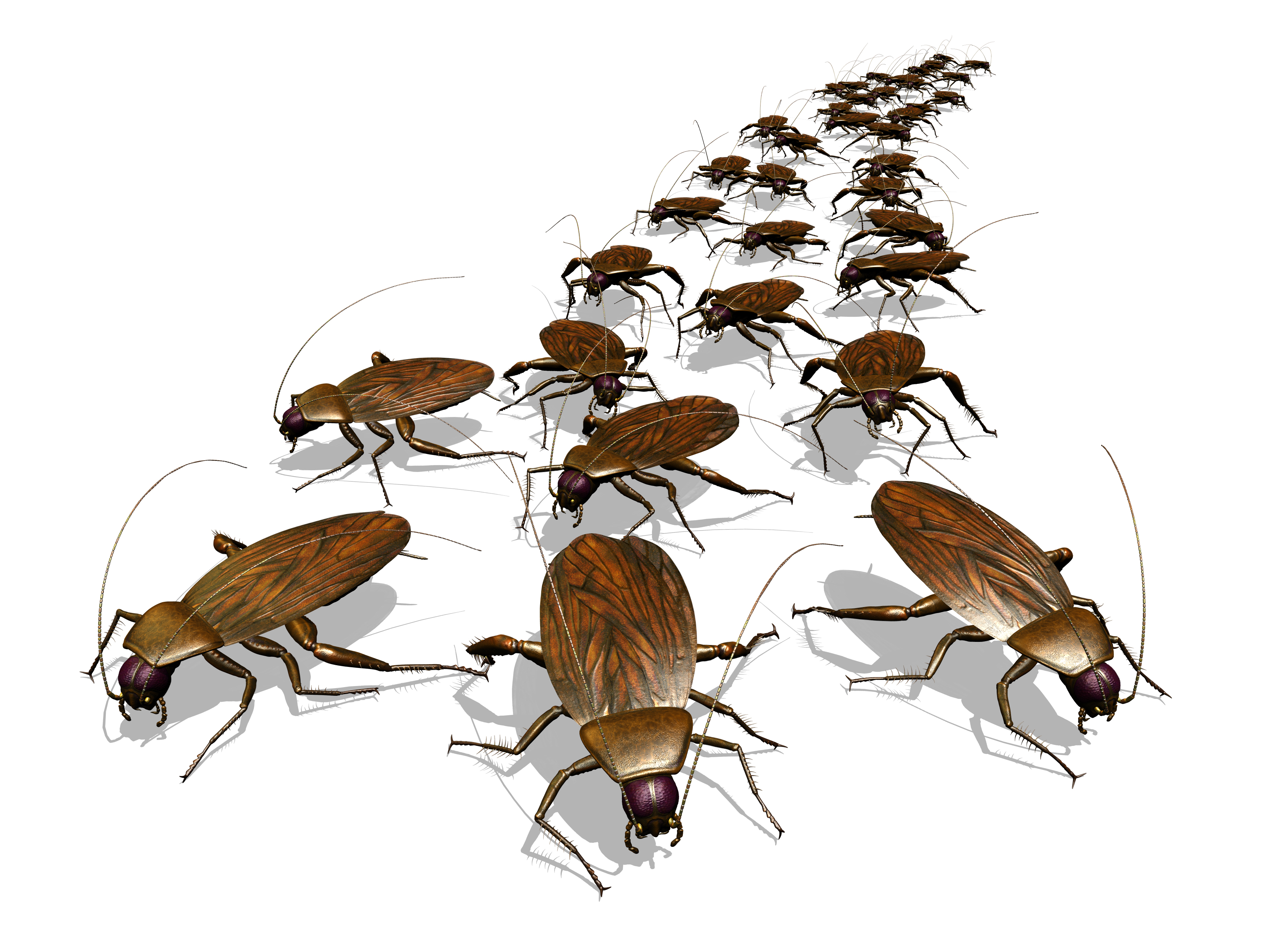 Big M Pest Control for Roaches in New Braunfels and Corpus Christi TX