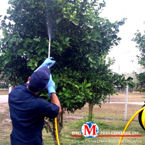 tree spraying corpus