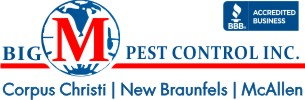 Your Best Pest Control Services From Big M Pest Control